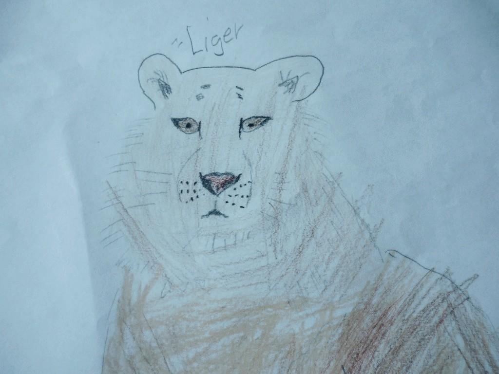 liger_0