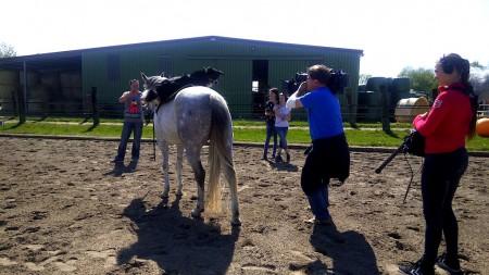 Hund reitet auf Pferd, Tierfimzentrale